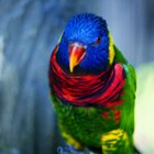 How to Make Your Own Lorikeet Food Nectar