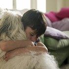 Tratamientos para las úlceras estomacales en los perros