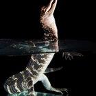 Adaptaciones terrestres de reptiles