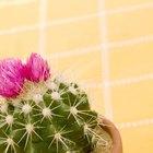 Cuáles son los gusanos de cactus