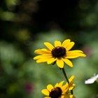 Las mejores plantas para clima caliente