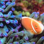 Is it Possible to Have High Alkalinity & Low pH in a Reef Aquarium?