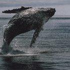 Jonah & the Whale Christian Children Activities