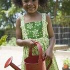 Cómo cuidar de los árboles ficus plantados en macetas