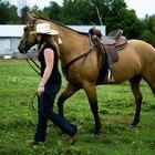 Tipos de trabajo que se realizan en un rancho equino