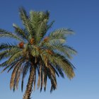 What Is Palm Tree Wood Used For?