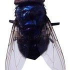 Cómo matar moscardones