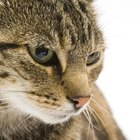 Does Certain Cat Food Make Cat Feces Smell Worse?