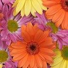 Cómo sumergir flores en cera