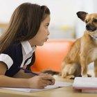 Top 10: los perros más pequeños