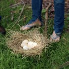 ¿Cuándo producen huevos las gallinas Leghorn?
