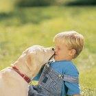 Cães: razões pelas quais eles lambem as orelhas dos humanos