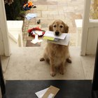 Cómo dejar a tu perro mientras te vas de vacaciones