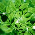 A fotossíntese é um processo endergônico ou exergônico?