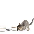 Are Rat Traps Dangerous for Kittens?