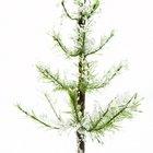 Cómo hacer que tu árbol artificial se vea frondoso
