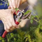 Hand shears work best with small branches.