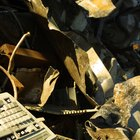 The disadvantages of waste disposal