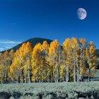 Los árboles que son buenos para la protección contra el viento