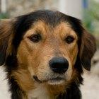 ¿Qué es un perro callejero?