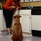 ¿Por qué los perros arrastran su trasero sobre el piso?