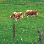 Técnicas para construir cercas para ganado