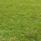 Produtos aplicados em gramados para eliminar larvas