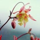 Por qué cambia de color las flores