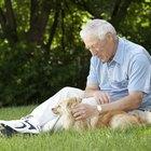 Como encontrar o ponto onde seu cachorro sente cócegas