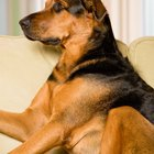 How to Get Rid of Pet Odors With Baby Powder