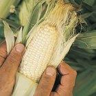 Cómo hacer sémola de maíz casera