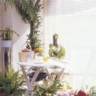 Many houseplants can tolerate and even thrive in bright sunlight.