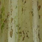 Cómo reparar una pared que está rugosa y que tiene la pintura desprendida