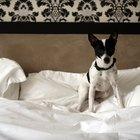 Cómo quitar el olor a una almohada