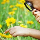 Actividades prácticas con flores para niños