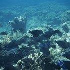 ¿Qué tipos de hongos crecen en el océano?