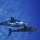 ¿Cuánto dinero ganan los biólogos marinos en un año?