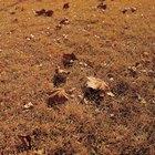 Tratamentos para lagartas de gramado