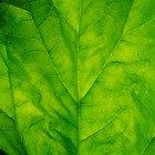 Pigmentos vegetales encontrados en las espinacas
