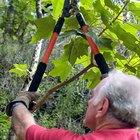 Con qué cubrir los extremos cuando se corta una rama de árbol