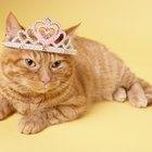 Como saber se uma gata foi castrada