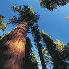 Acampar en Lodgepole Campground en Sequoia National Park
