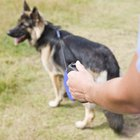 Tail Chasing & Anxiety in German Shepherd Dogs