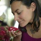 Florist Certification