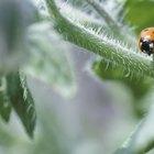 Tipos de insetos que se alimentam de plantas
