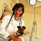 As desvantagens de ser veterinário