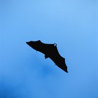 Actividades acerca de murciélagos y ecolocación