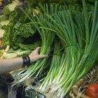 Quais partes da cebolinha-verde são comestíveis?
