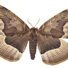 Como as mariposas se acasalam?