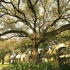 Cómo hacer paisajismo alrededor de un árbol